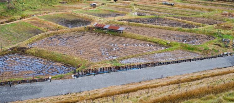 Soggy Field