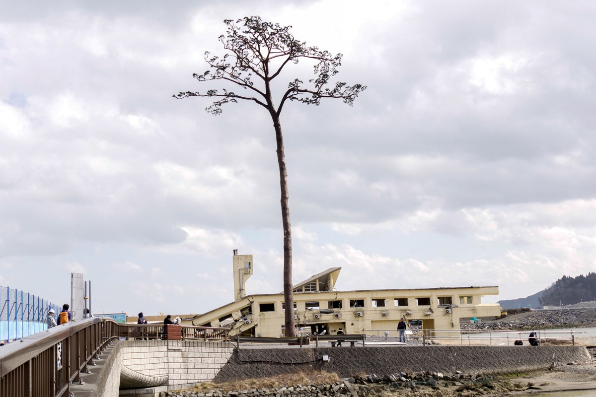 Miracle Pine